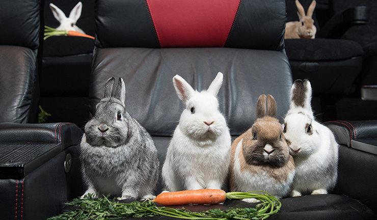 vue rabbits